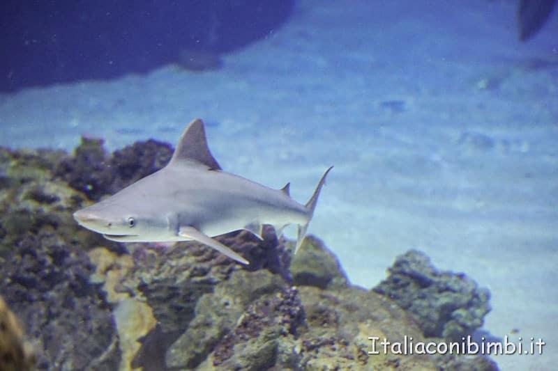 Oceanografico di Valencia - squalo