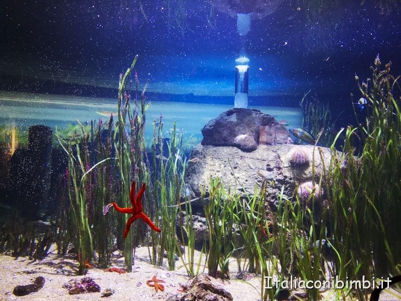 Oceanografico di Valencia - stella marina