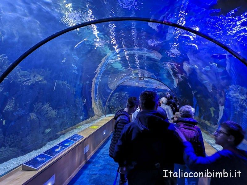 Oceanografico di Valencia - tunnel di vetro
