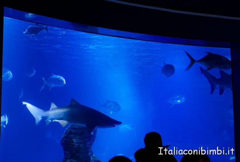 Oceanografico di Valencia - vasca degli squali