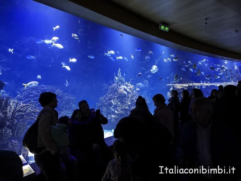 Oceanografico di Valencia - vasca doppia lato
