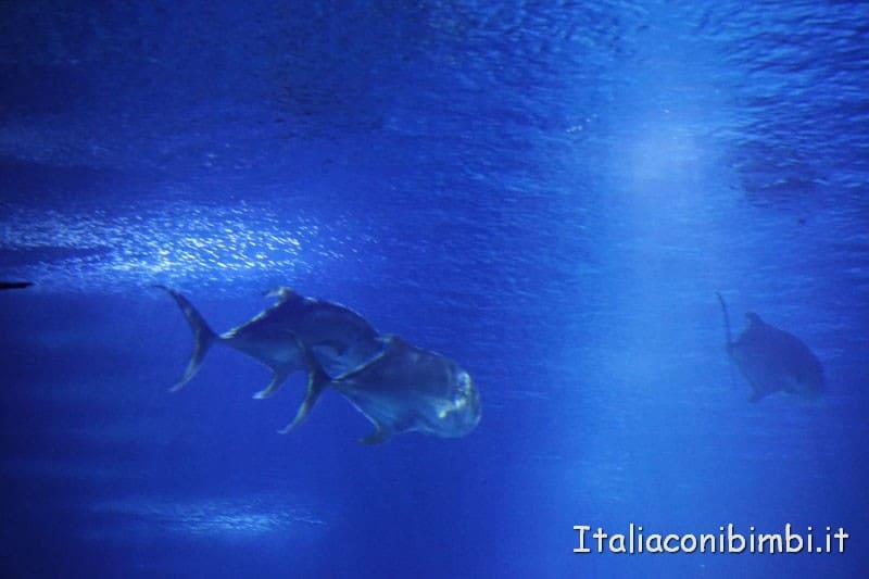 Oceanografico di Valencia - vasca grande acquario