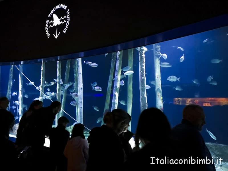 Oceanografico di Valencia - vasca squali