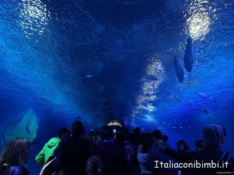 tunnel manta