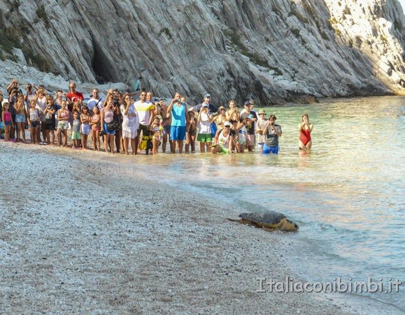 Rilascio della tartaruga spiaggia delle due sorelle - tartaruga che entra in acqua