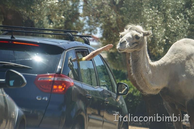 Zoo safari di Fasano - bambino che tocca il cammello