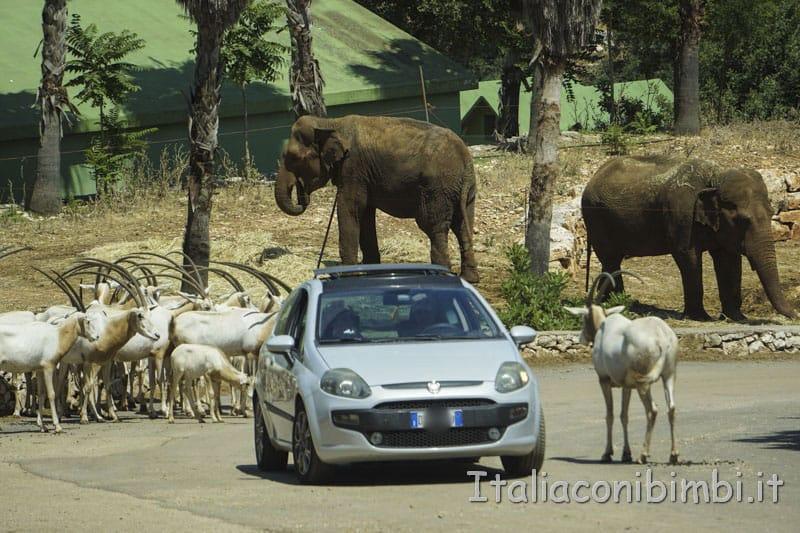 Zoo safari di Fasano- elefanti e antilopi