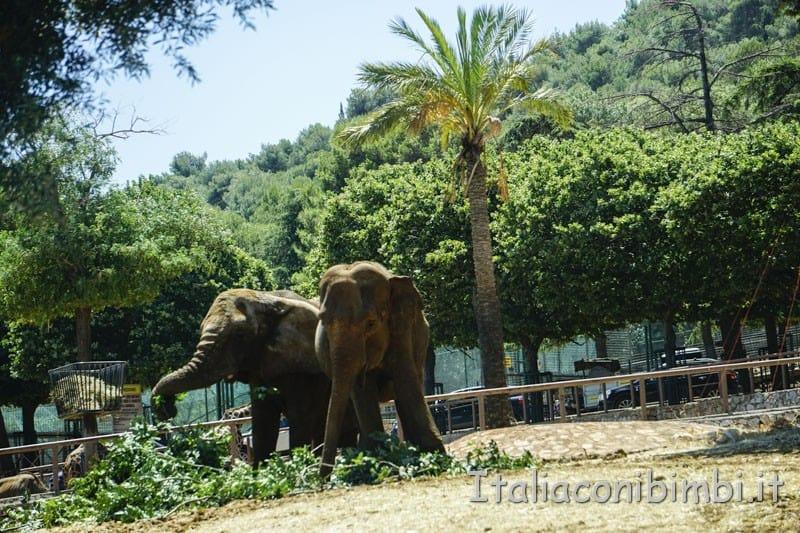 Zoo safari di Fasano - elefanti