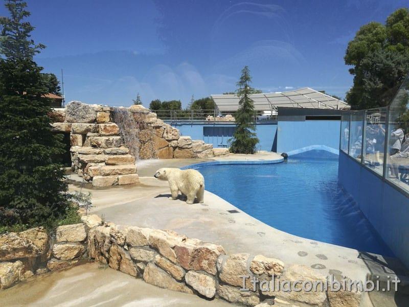 Zoo safari di Fasano - orso bianco