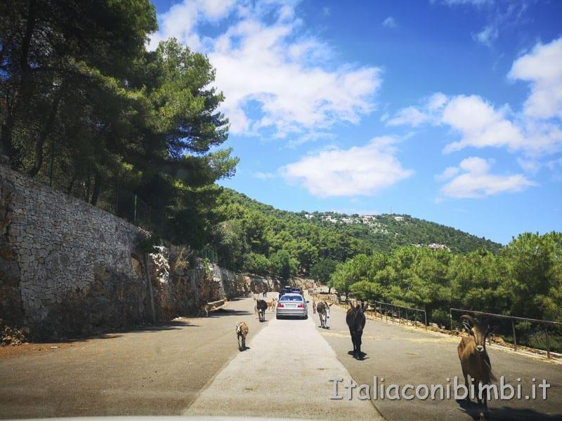 Zoo safari di Fasano - strada con i cervi liberi