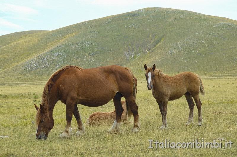 Andando verso Fonte Vetica- cavalli
