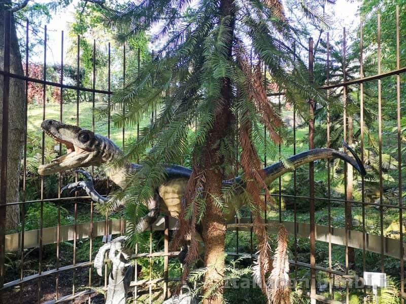 Giardini Trauttmansdorff di Merano - Wollemia nobilis