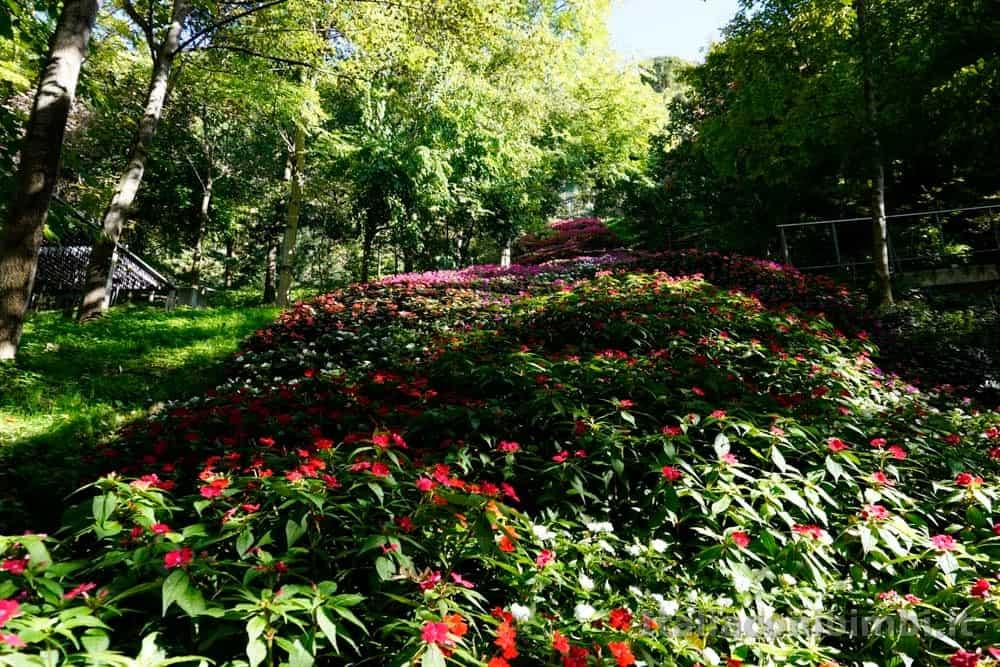 Giardini Trauttmansdorff di Merano - cascata di fiori