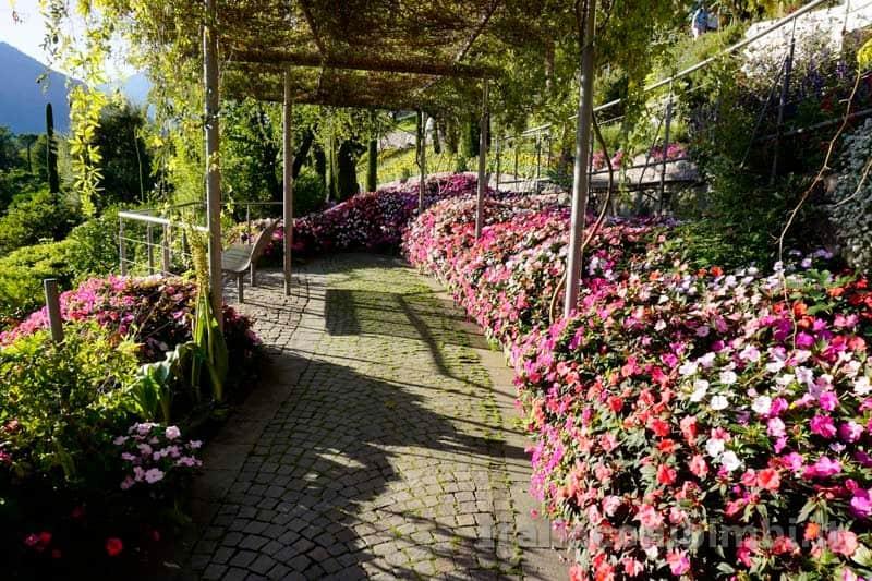 Giardini Trauttmansdorff di Merano - fiori