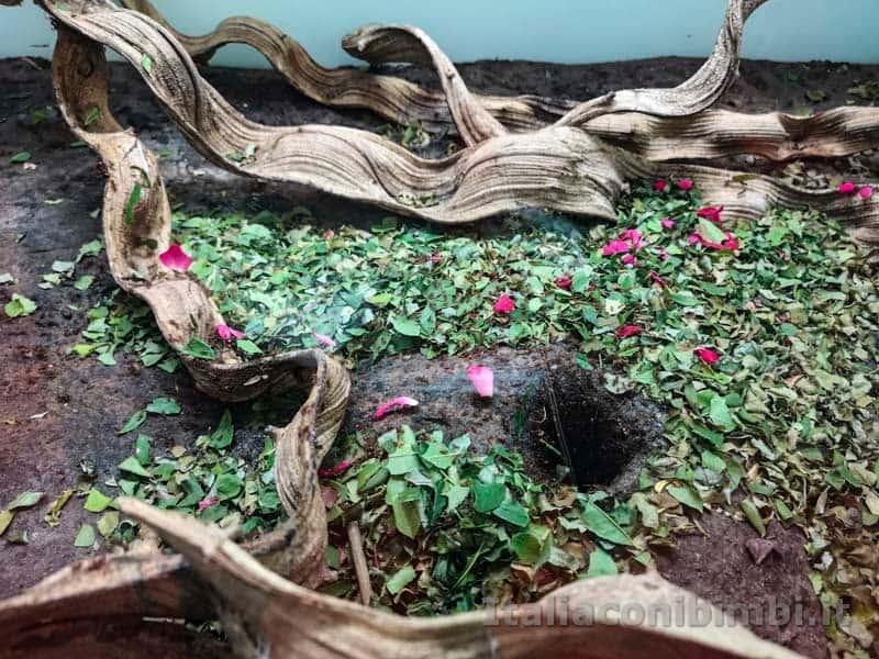 Giardini Trauttmansdorff di Merano - formiche nel terrarium