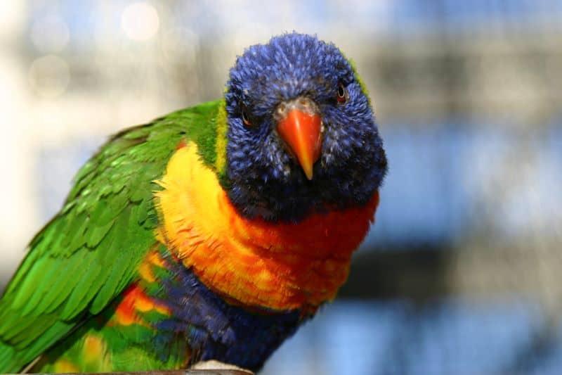 Uccelli nella voliera dei Giardini Trauttmansdorf