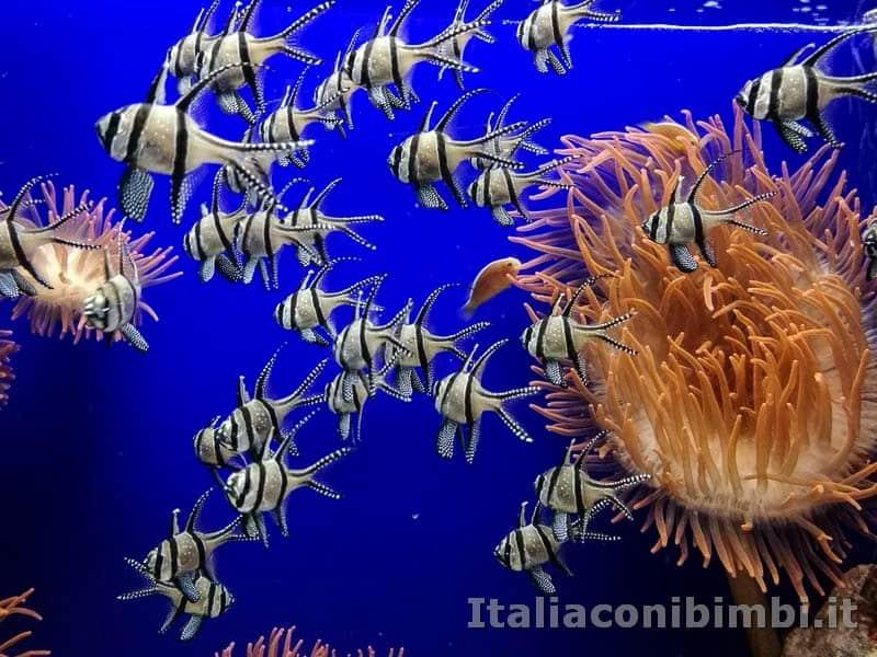Acquario di Genova - Isole Molucche