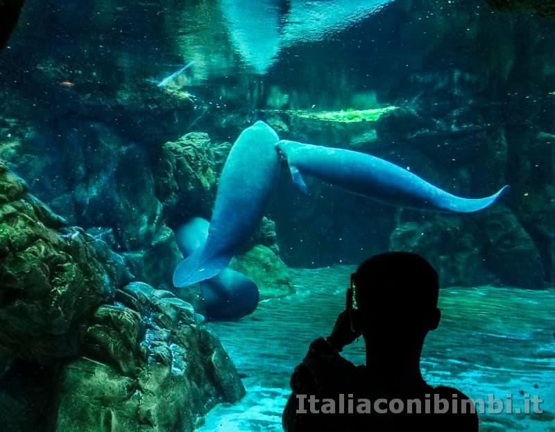 Acquario di Genova - Lamantini e bambino