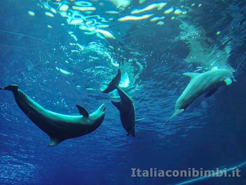 Acquario di Genova - delfini acrobazie nell'acqua