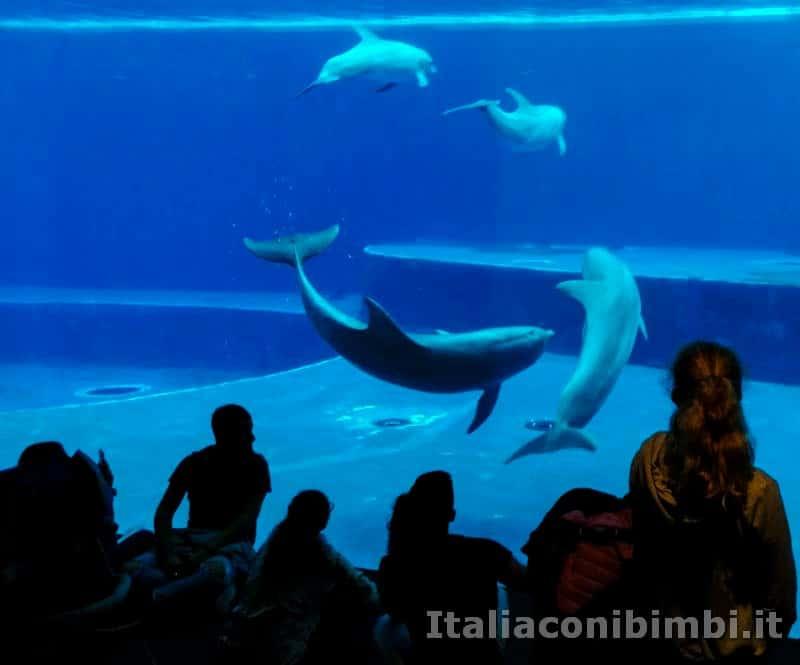 Acquario di Genova - delfini che nuotano insieme