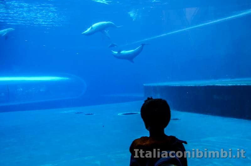 Acquario di Genova - delfini con bambino