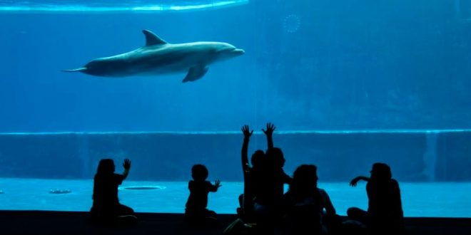 Acquario di Genova - delfini e bambini