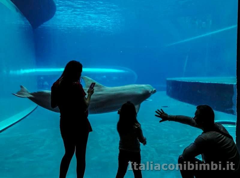 Acquario di Genova - delfini e famiglia