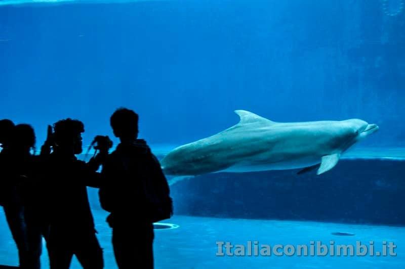Acquario di Genova - delfini