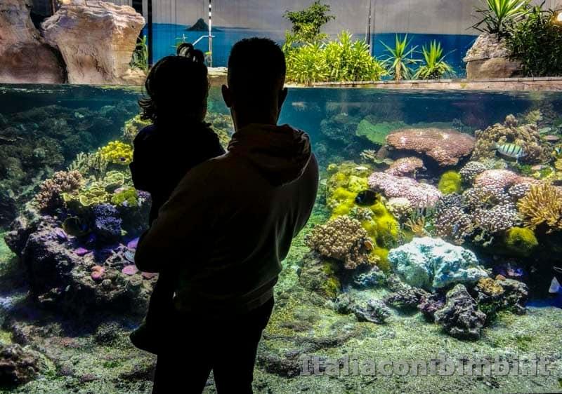 Acquario-di-Genova-il-mondo-dei-coralli