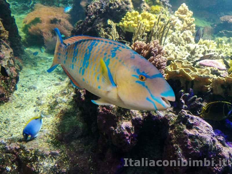 Acquario-di-Genova-pesce-tropicale