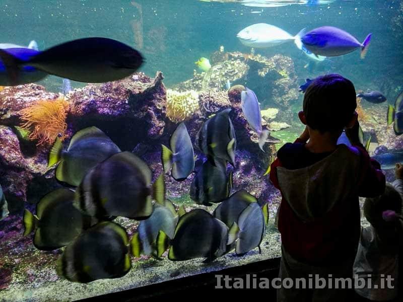 Acquario di Genova - pesci tropicali con bambini