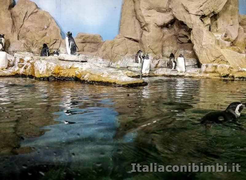 Acquario di Genova - pinguini