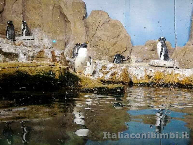 Acquario-di-Genova-pinguini-vasc