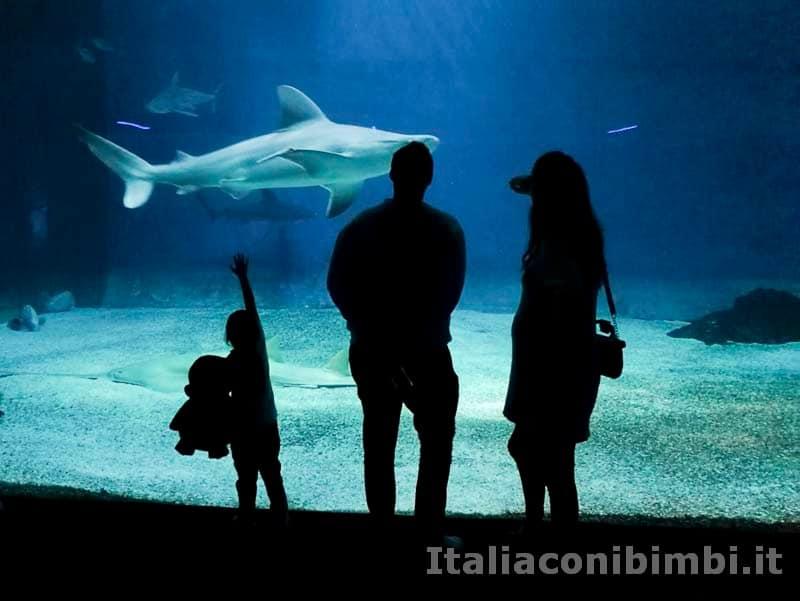 Acquario-di-Genova-squali-e-una-famiglia