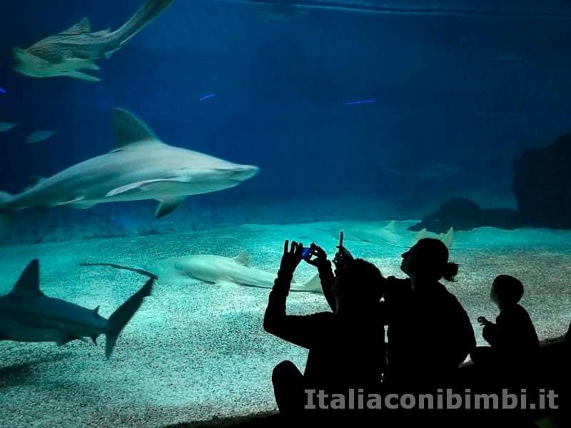 Acquario-di-Genova-squali