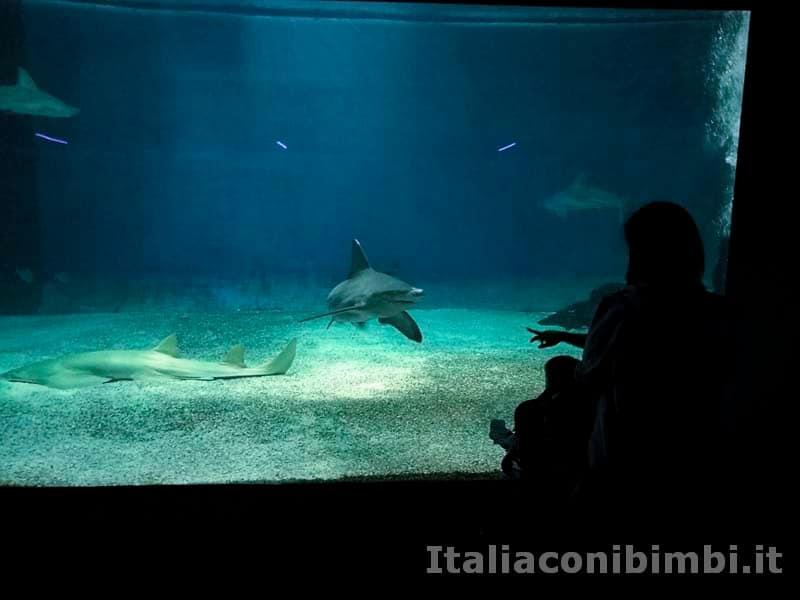 Acquario-di-Genova-squalo