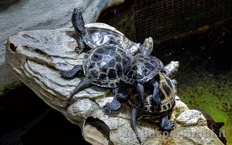 Acquario di Genova - tartarughe