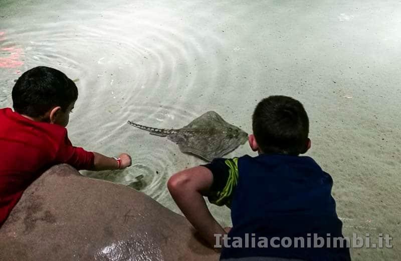 Acquario-di-Genova-vasca-tattile-bambini