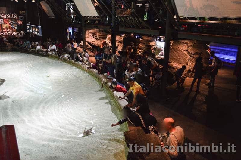 Acquario di Genova - vasca tattile