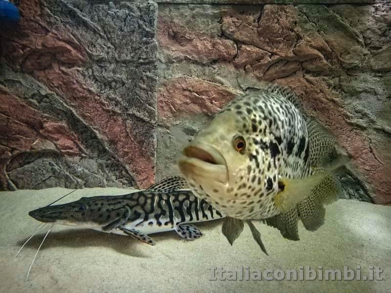 Museo delle di storia naturale di Pisa - acquario