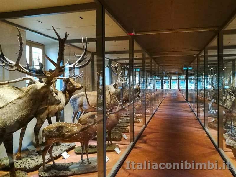 Museo-di-storia-naturale-di-Pisa-corridoio-con-animali-imbalsamati