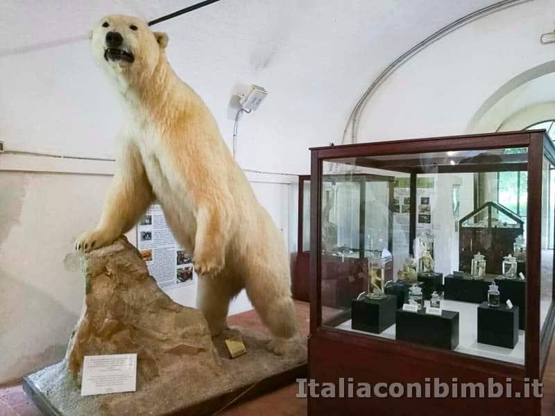 Museo-di-storia-naturale-di-Pisa-orso-bianco