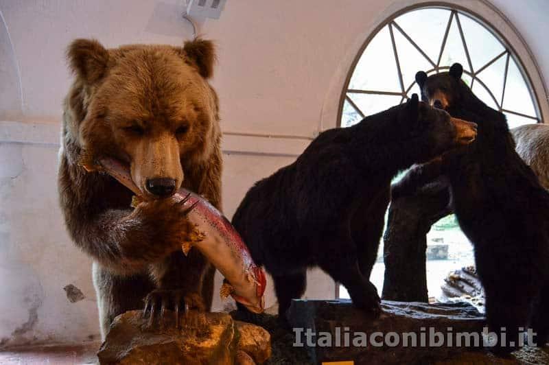 Museo di storia naturale di Pisa - orso che mangia un pesce