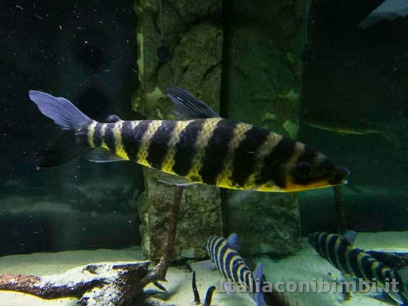 Museo-delle-di-storia-naturale-di-Pisa-pesce-a-righe