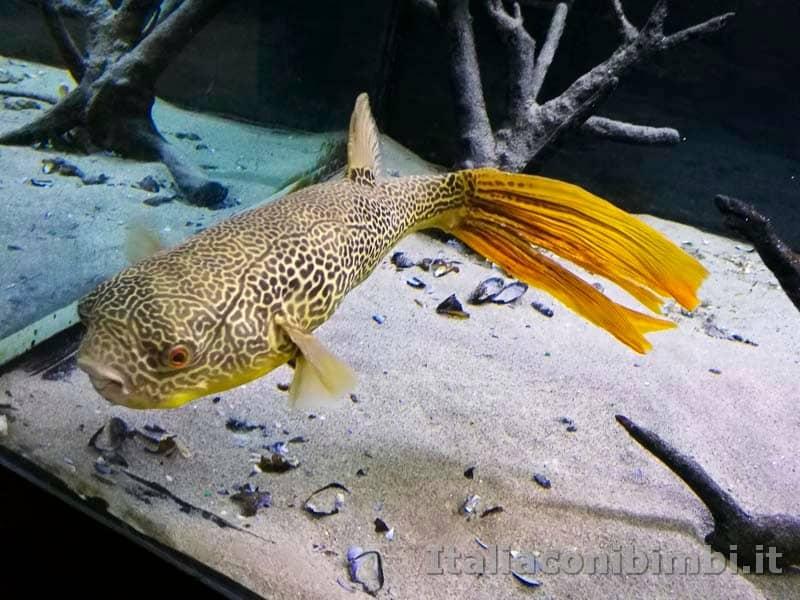 Museo-delle-di-storia-naturale-di-Pisa-pesce-giallo