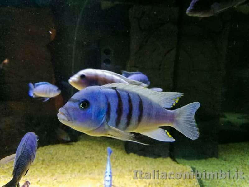 Museo-delle-di-storia-naturale-di-Pisa-pesci-azzurri