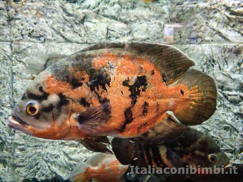 Museo-delle-di-storia-naturale-di-Pisa-pesci-rossi