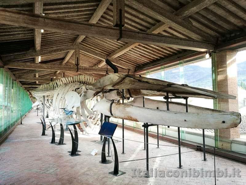 Museo-di-storia-naturale-di-Pisa-scheletri di balene