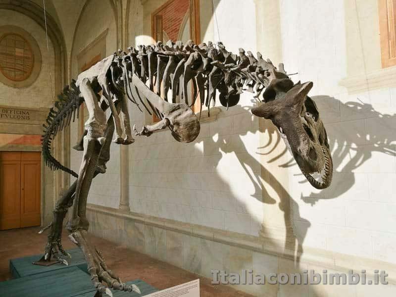Museo di storia naturale di Pisa - scheletri di dinosauri