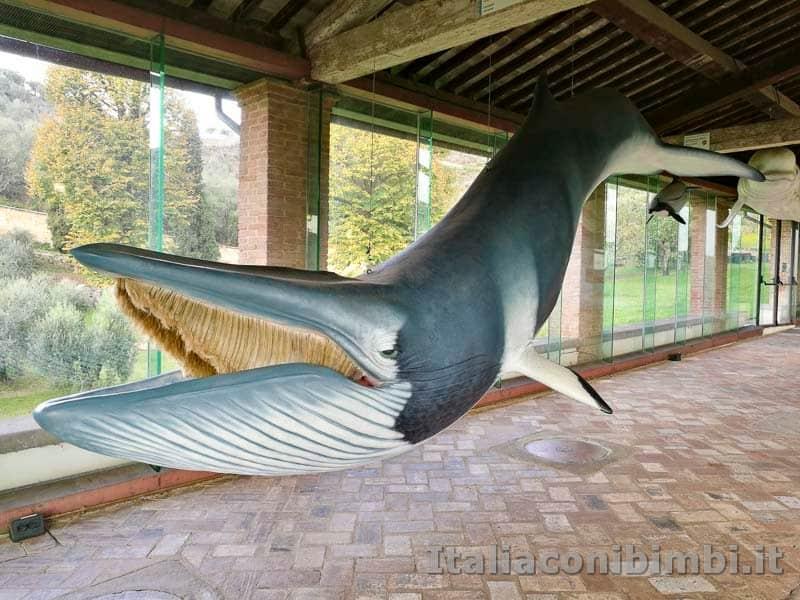 Museo-di-storia-naturale-di-Pisa-balena